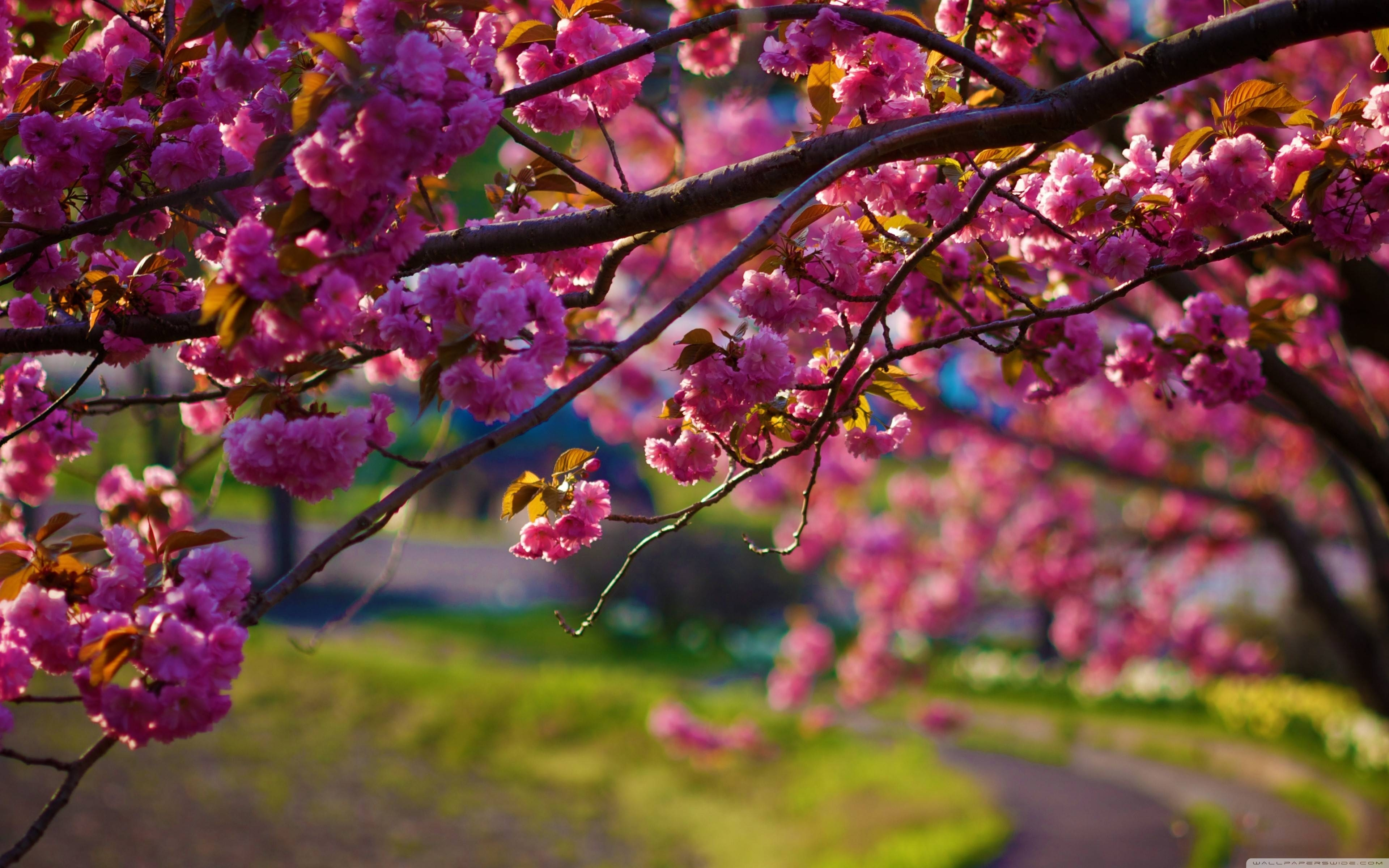wallpaper's collection: «spring nature wallpapers»