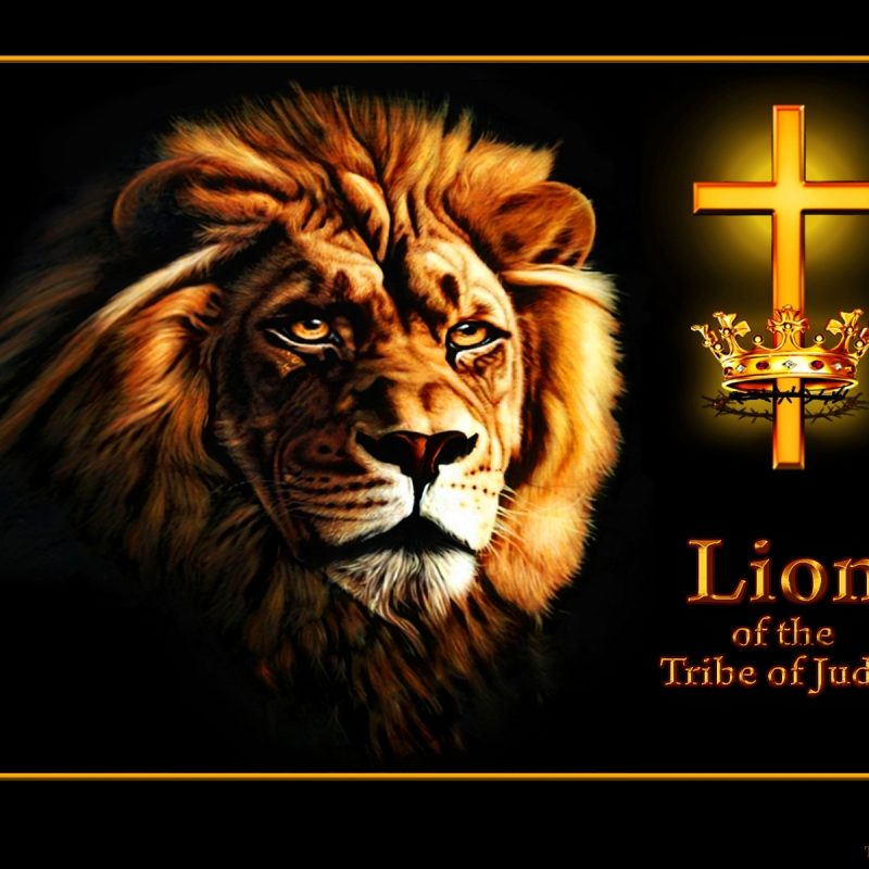 10 Most Popular Lion Of The Tribe Of Judah Pictures FULL HD 1920×1080 For PC Desktop 2021 free download wallpapers lion of the tribe of judah theswordbearer 800x800