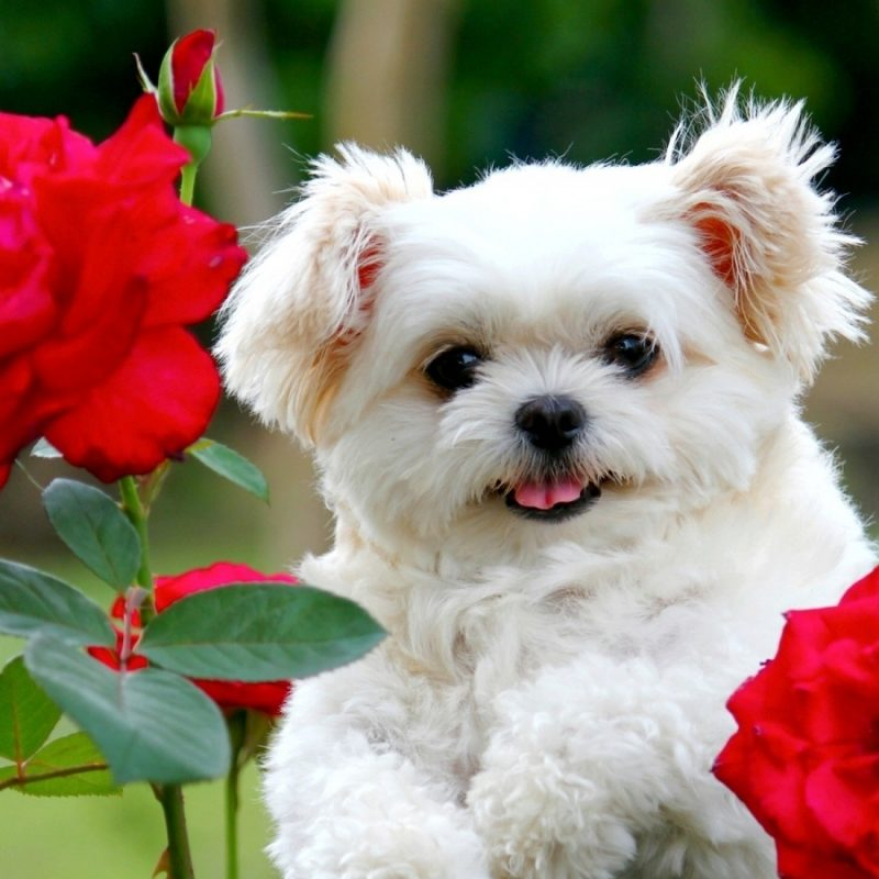 10 Best Cute Dog Wallpaper Free Download FULL HD 1080p For PC Background 2020 free download wallpapers of cute images hd page 45 800x800