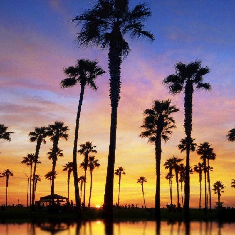 10 Best Palm Trees Desktop Wallpaper FULL HD 1080p For PC Desktop 2018 free download wallpapers of the day palm trees 1366x768 palm trees photos 800x800