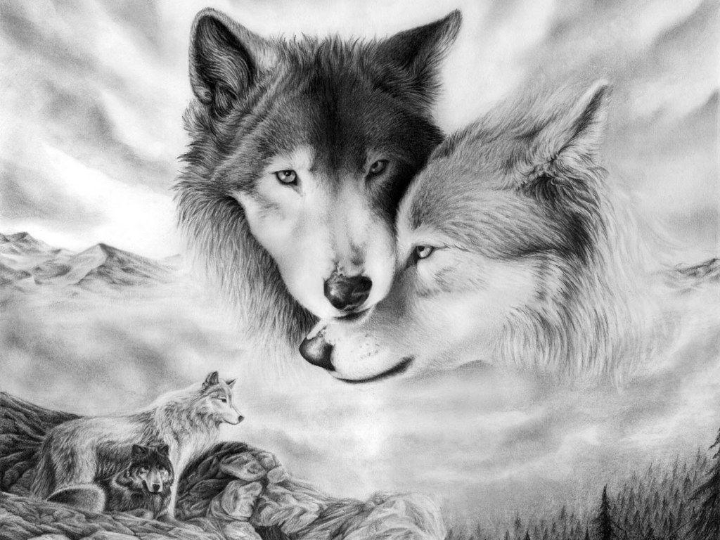 wallpapers of wolves - wallpaper cave