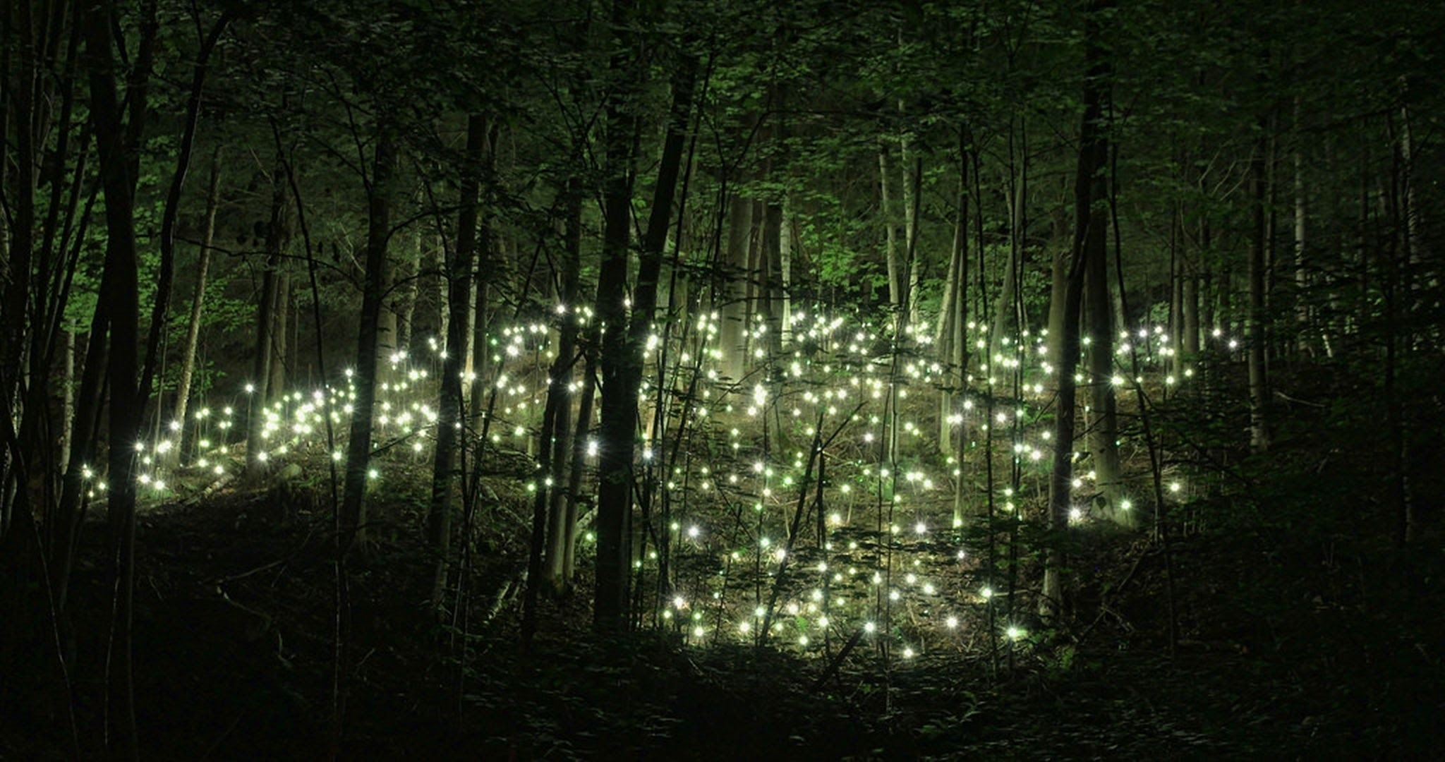 wandering in the enchanted forest: 8 hours of relaxation - sleep