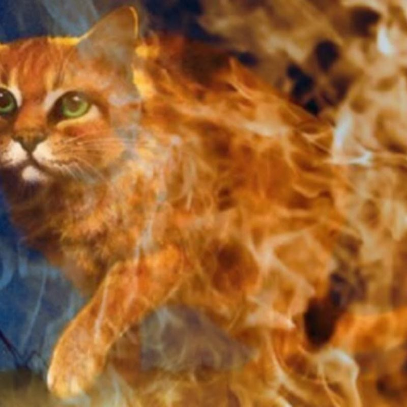 10 Most Popular Warrior Cats Wallpaper Firestar FULL HD 1080p For PC Background 2018 free download warriors cats backgrounds wallpaper cave 800x800