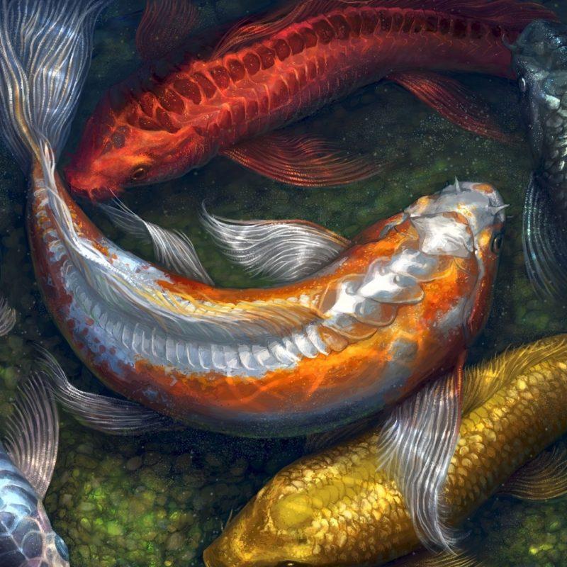 10 Most Popular Koi Fish Wallpaper Hd FULL HD 1080p For PC Background 2020 free download water paintings fish koi artwork pebbles 1600x1250 wallpaper art hd 800x800