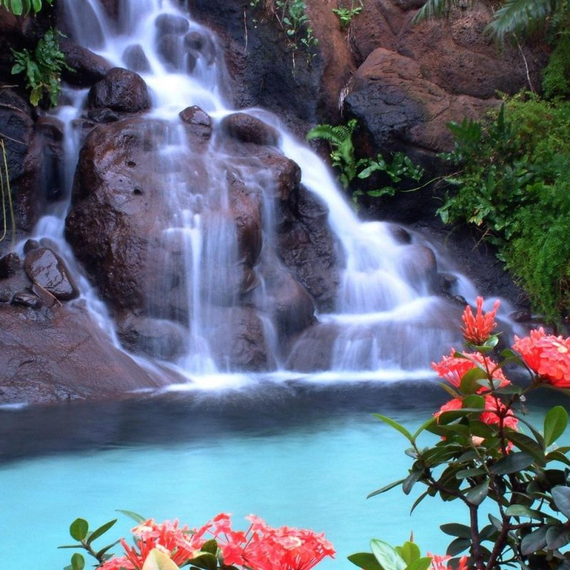 10 Best Waterfall And Flowers Wallpaper FULL HD 1080p For PC Desktop 2018 free download waterfall and red flowers wallpaper download wallpaper nature free 800x800