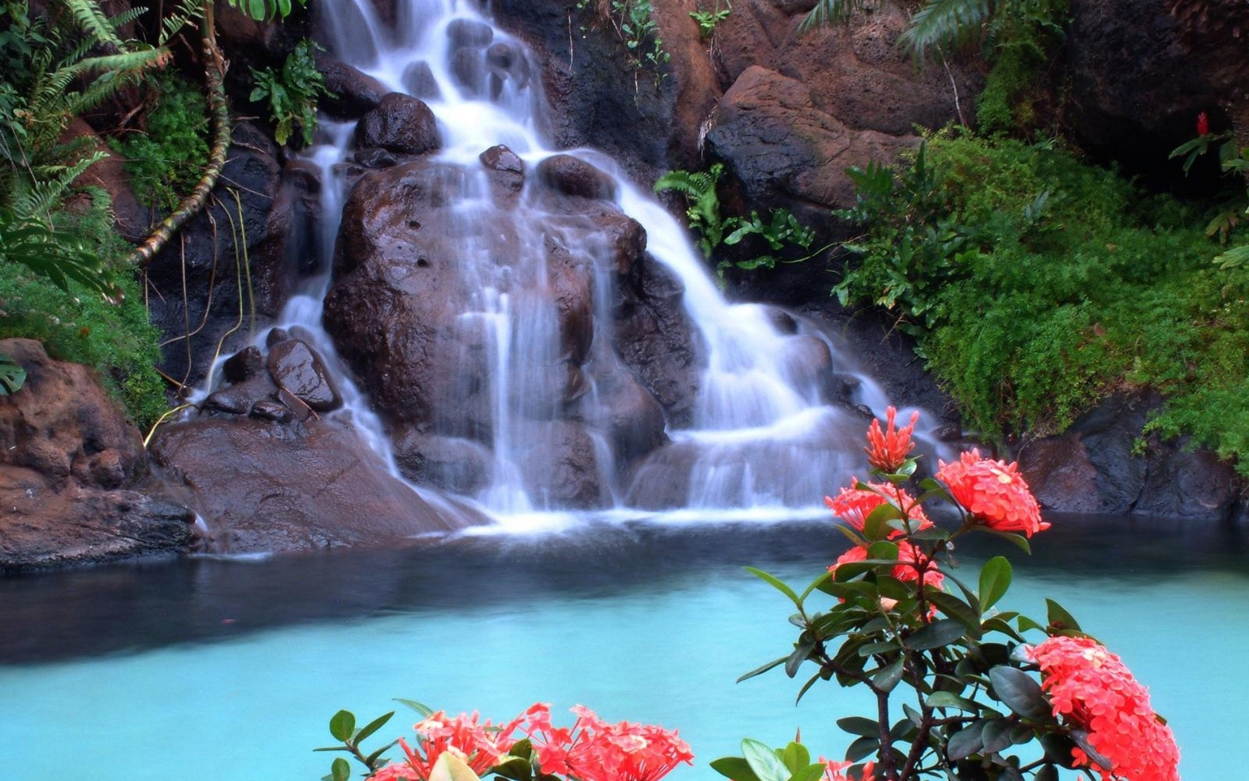 waterfall and red flowers wallpaper - download wallpaper nature free