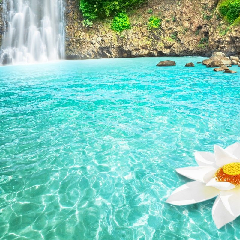 10 Best Waterfall And Flowers Wallpaper FULL HD 1080p For PC Desktop 2018 free download waterfall lotus dream wallpaper hd desktop wallpapers pinterest 800x800