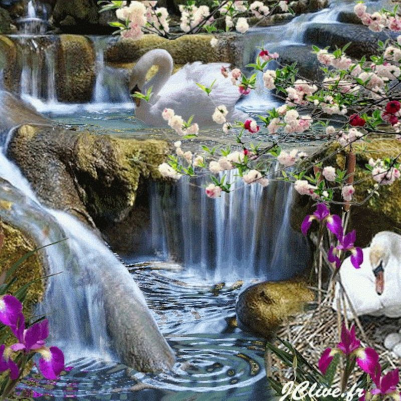 10 Best Waterfall And Flowers Wallpaper FULL HD 1080p For PC Desktop 2018 free download waterfalls beautiful waterfall art nature swan eggs flowers 800x800