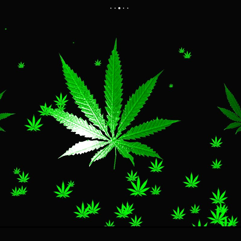 10 New Weed Leaf Wallpaper Hd FULL HD 1080p For PC Desktop 2020 free download weed hd wallpapers group 74 800x800