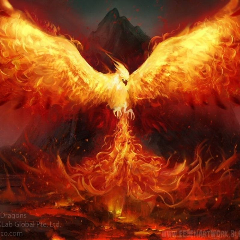 10 New Phoenix Rising From The Ashes Wallpaper FULL HD 1080p For PC Background 2018 free download what mythological creature are you phoenix deviantart and creatures 800x800