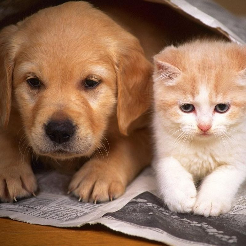 10 New Cat And Dogs Pictures FULL HD 1080p For PC Background 2018 free download whats better cats or dogs the cfhs tiger times 800x800