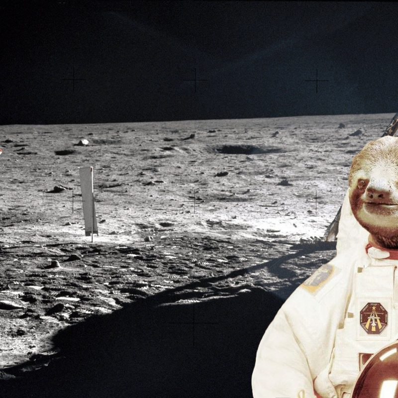 10 Latest Sloth Astronaut Wallpaper FULL HD 1080p For PC Background 2020 free download whats your desktop background askreddit 800x800
