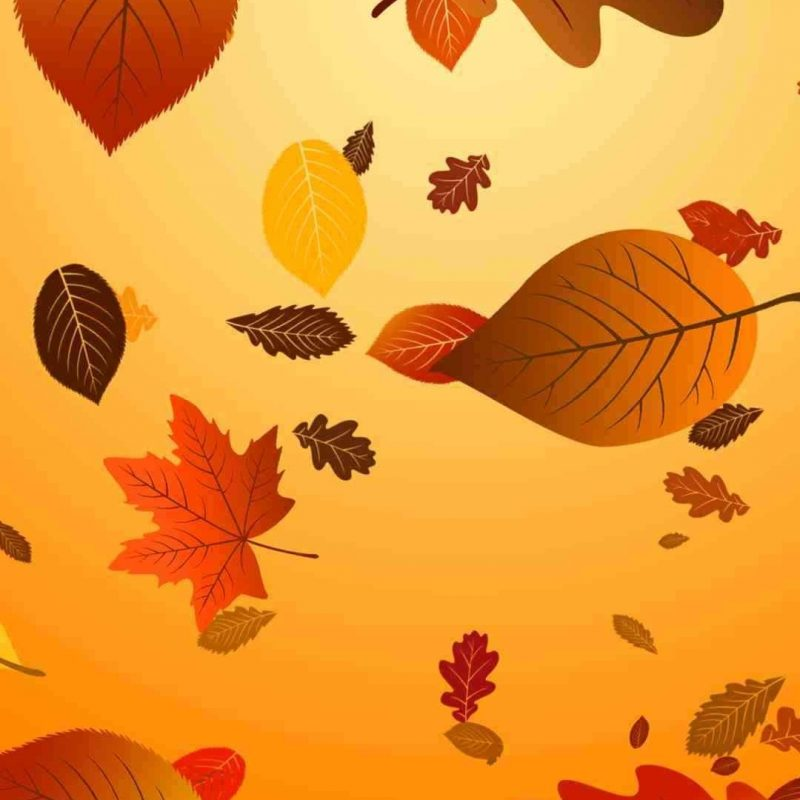 10 Best Thanksgiving Wallpaper For Android FULL HD 1920×1080 For PC Background 2018 free download which 2015 thanksgiving iphone 6 plus wallpaper do you like 800x800
