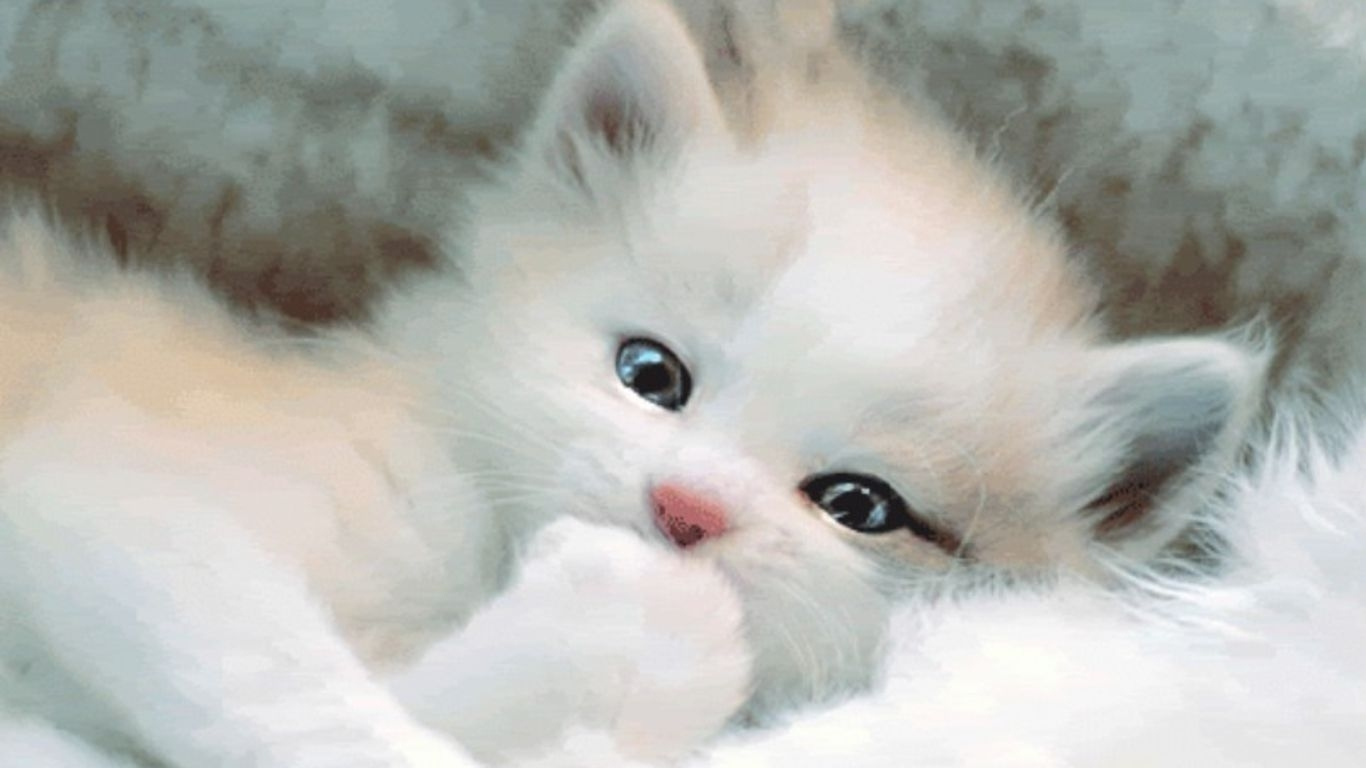 white cat wallpapers - wallpaper cave | best games wallpapers