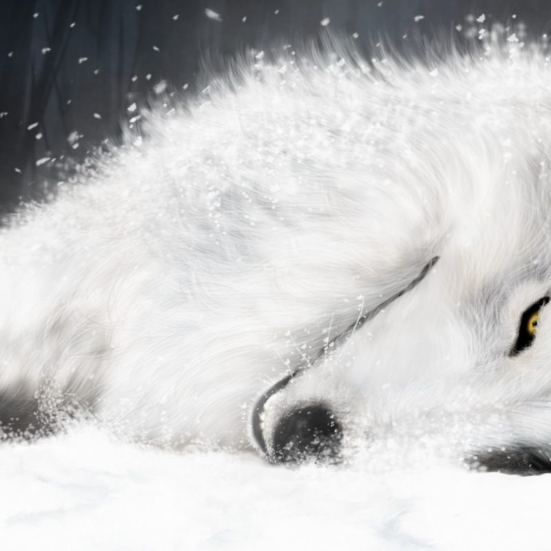 10 Most Popular White Wolf Wallpaper 1920X1080 FULL HD 1920×1080 For PC Background 2018 free download white fantasy wolf e29da4 4k hd desktop wallpaper for 4k ultra hd tv 800x800