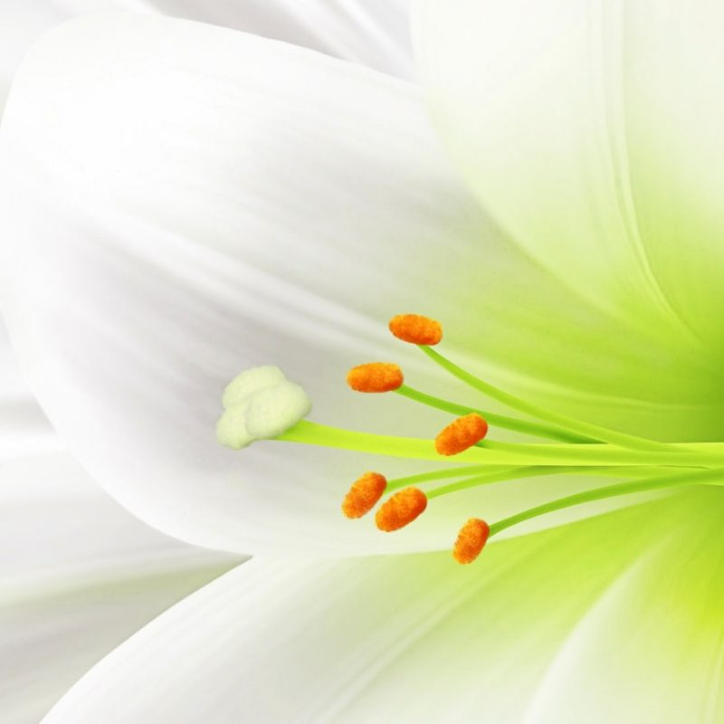10 Latest White Flower Wall Paper FULL HD 1920×1080 For PC Desktop 2018 free download %name