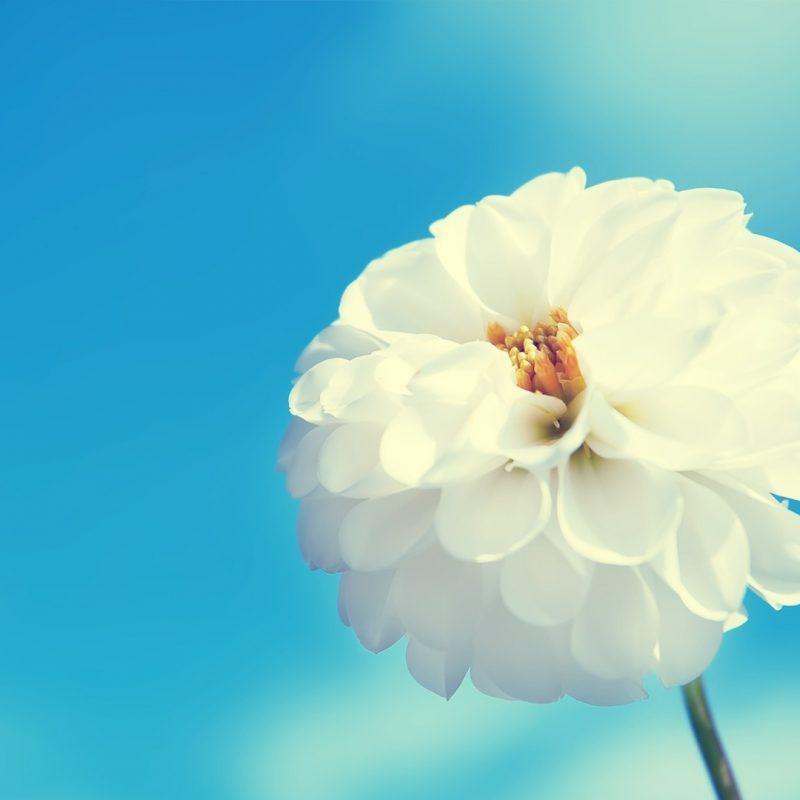 10 Latest White Flower Wall Paper FULL HD 1920×1080 For PC Desktop 2018 free download white flowers wallpaper 33697 1920x1080 px hdwallsource 800x800