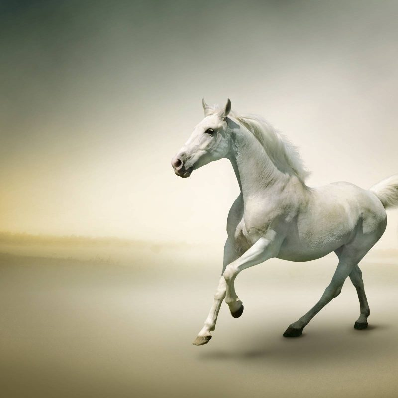 10 New Beautiful Horses Pictures Wallpapers FULL HD 1920×1080 For PC Desktop 2020 free download white horse wallpapers wallpaper cave 800x800