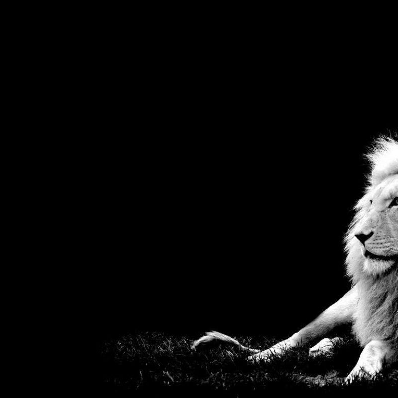 10 Most Popular Black And White Lion Background FULL HD 1080p For PC Desktop 2020 free download white lion backgrounds wallpaper cave 800x800