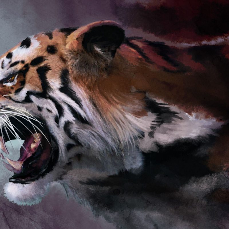 10 New Angry Tiger Wallpaper Hd 1080P FULL HD 1920×1080 For PC Desktop 2018 free download white tiger animals zoo park white tiger wallpapers for desktop hd 800x800
