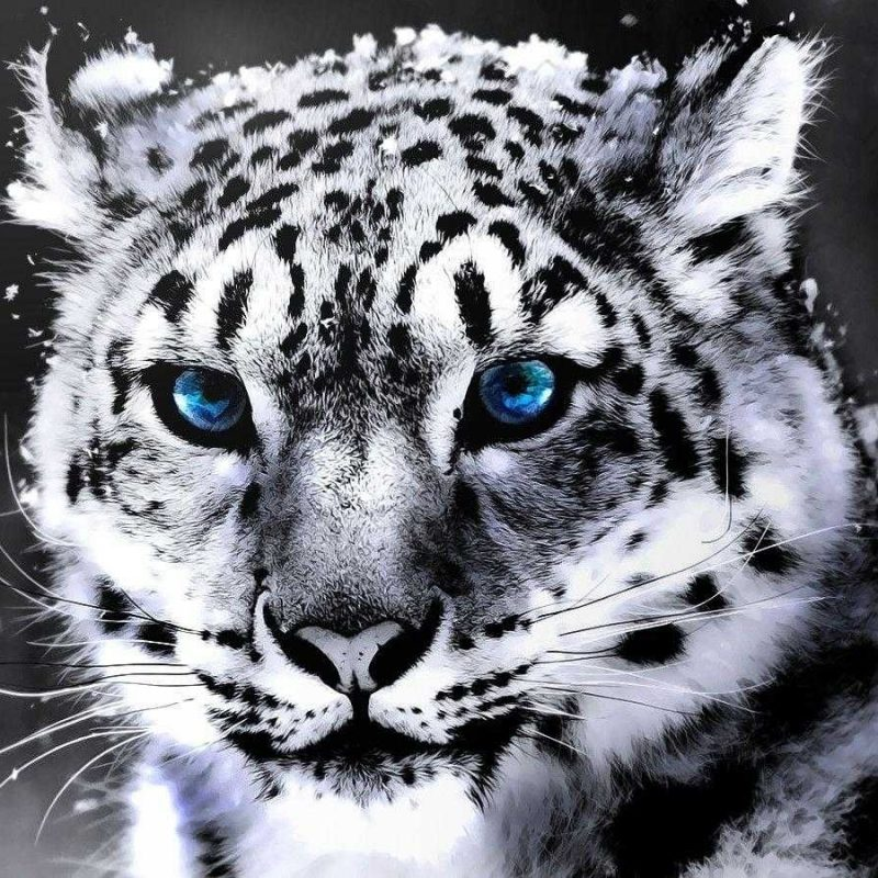 10 Best Wallpapers Of White Tigers FULL HD 1920×1080 For PC Background 2020 free download white tiger hd wallpaper desktop of smartphone full pics wallvie 800x800