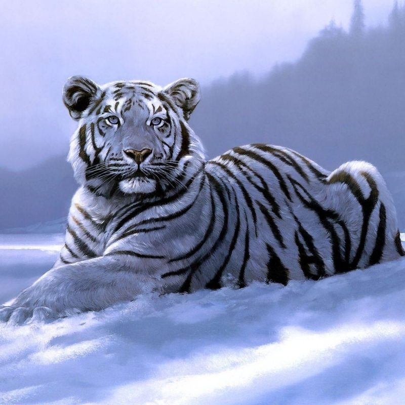 10 New White Tiger Wallpaper 3D FULL HD 1920×1080 For PC Desktop 2020 free download white tiger pictures wallpaper 800x800