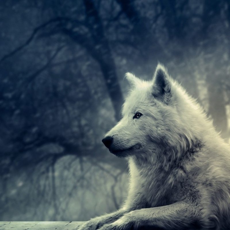 10 Latest Wolf Desktop Wallpaper Hd FULL HD 1920×1080 For PC Desktop 2018 free download white wolf painting e29da4 4k hd desktop wallpaper for 4k ultra hd tv 1 800x800