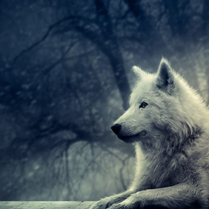 10 Most Popular White Wolf Wallpaper 1920X1080 FULL HD 1920×1080 For PC Background 2018 free download white wolf painting e29da4 4k hd desktop wallpaper for 4k ultra hd tv 800x800