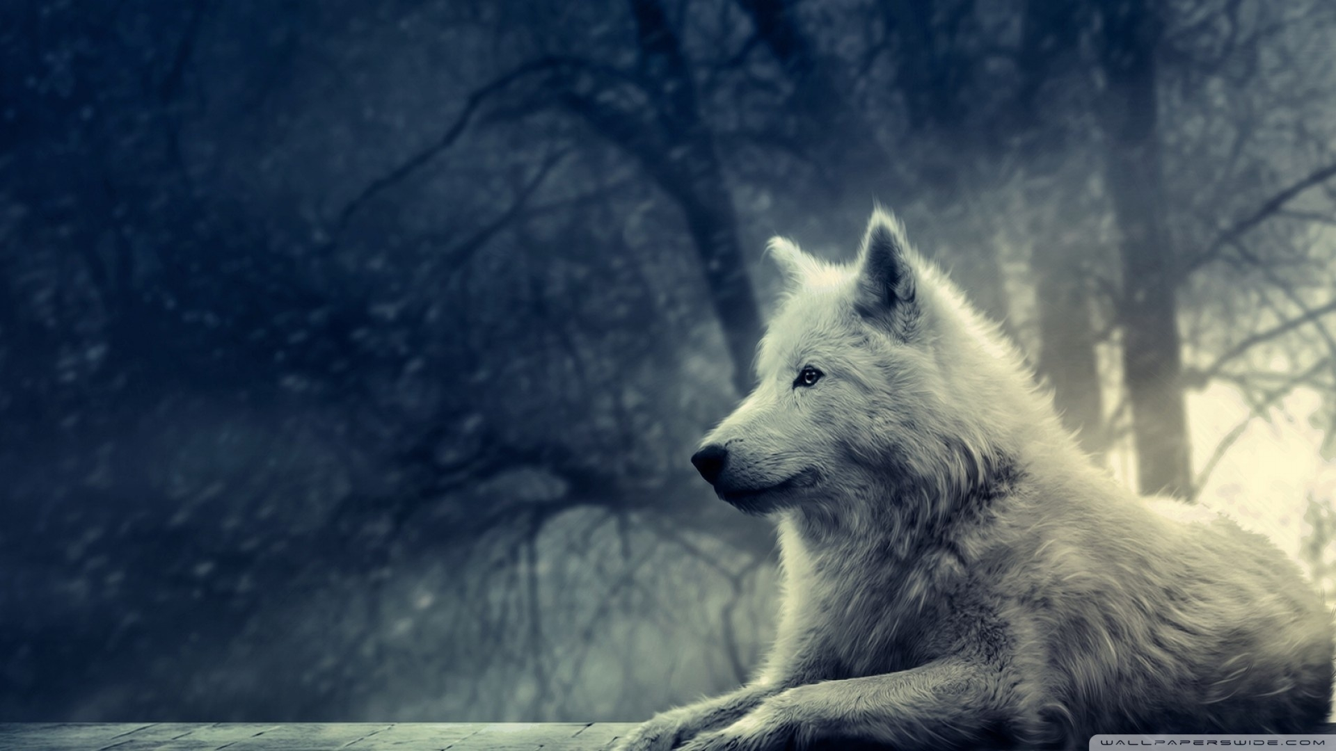 white wolf painting ❤ 4k hd desktop wallpaper for 4k ultra hd tv