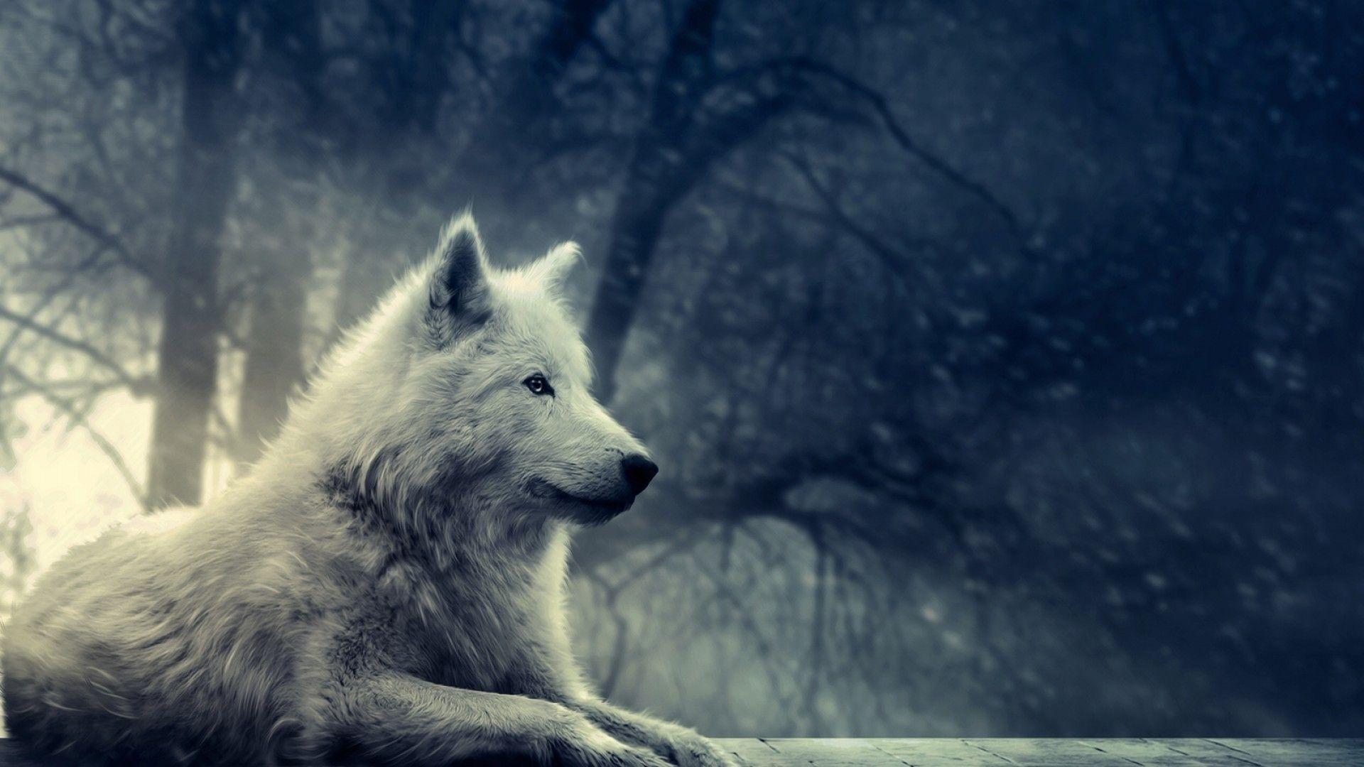 white wolf wallpaper 19858 1920x1080 px ~ hdwallsource