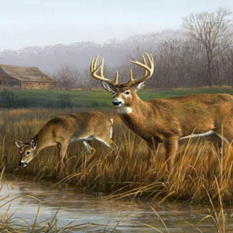 10 Best Deer Hunting Desktop Wallpaper FULL HD 1080p For PC Desktop 2021 free download whitetail deer backgrounds wallpaper cave 800x800