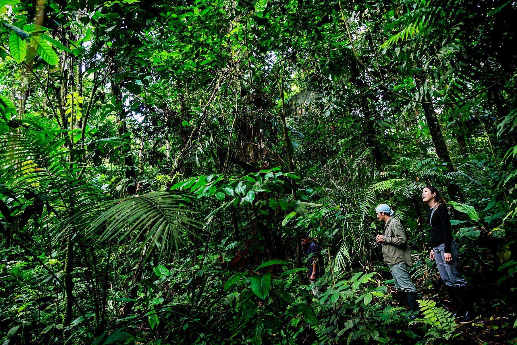 why you should visit the amazon rainforest | travel tips