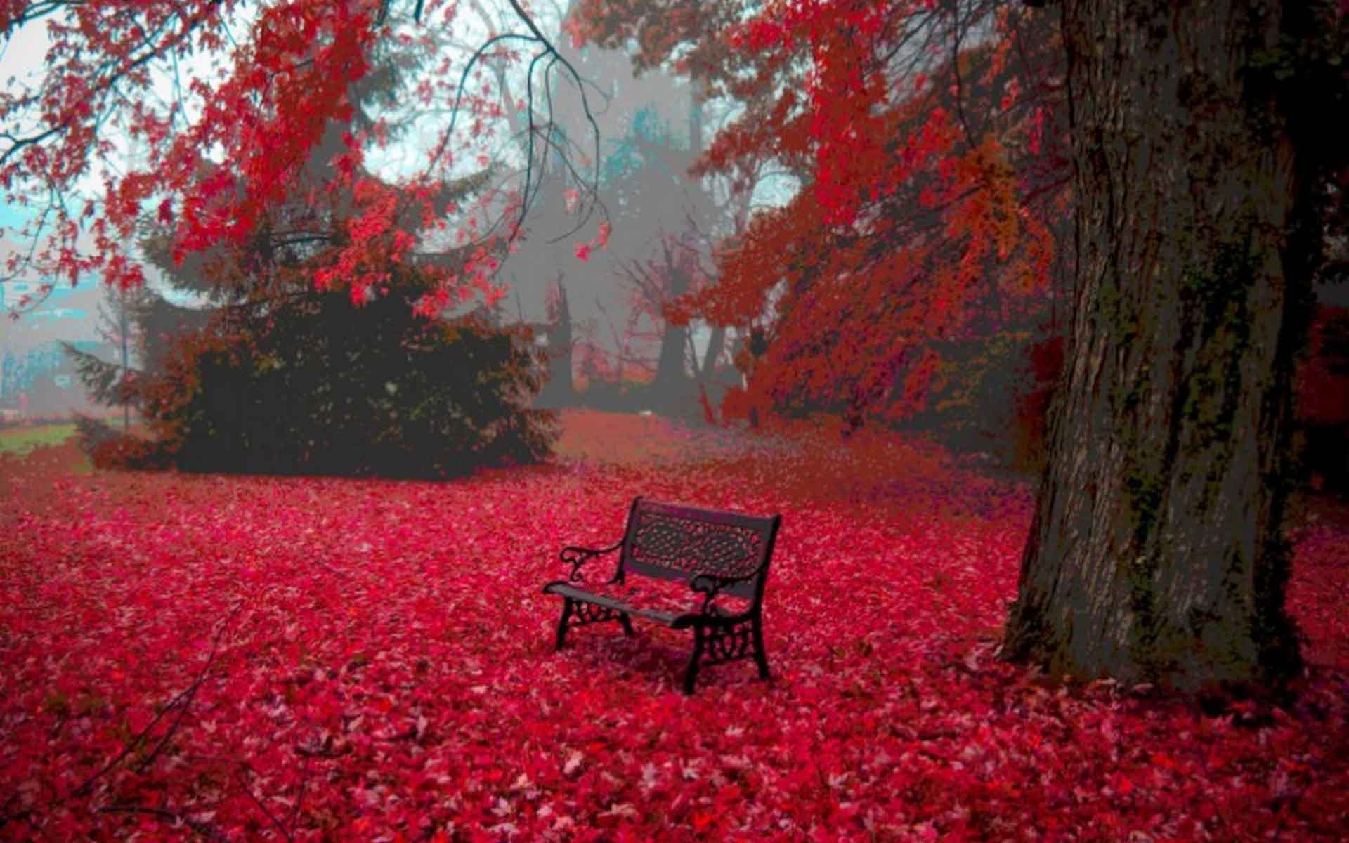 widescreen red color nature amazing look hd wide with wallpaper