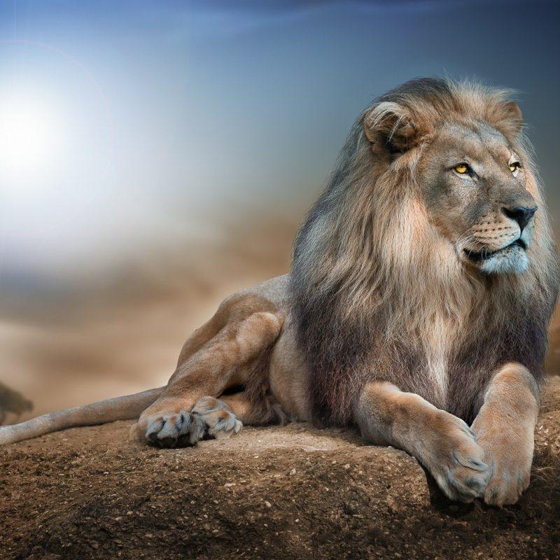 10 Best Wild Animal Wall Paper FULL HD 1080p For PC Desktop 2018 free download wild animals wallpaper hd pixelstalk 800x800