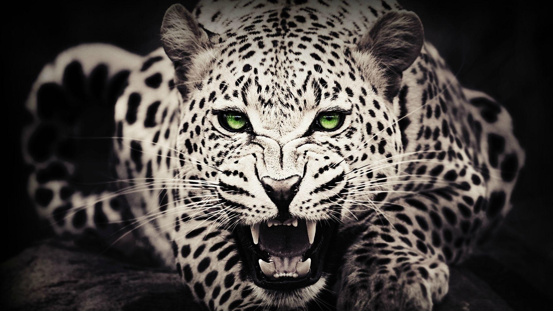 wild animals wallpapers - 47 wild animals modern 4k ultra hd images