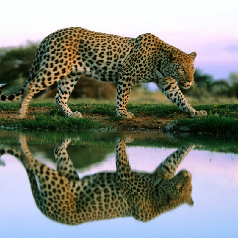10 Best Wild Animal Wall Paper FULL HD 1080p For PC Desktop 2020 free download wild animals wallpapers high resolution google search pictures 800x800
