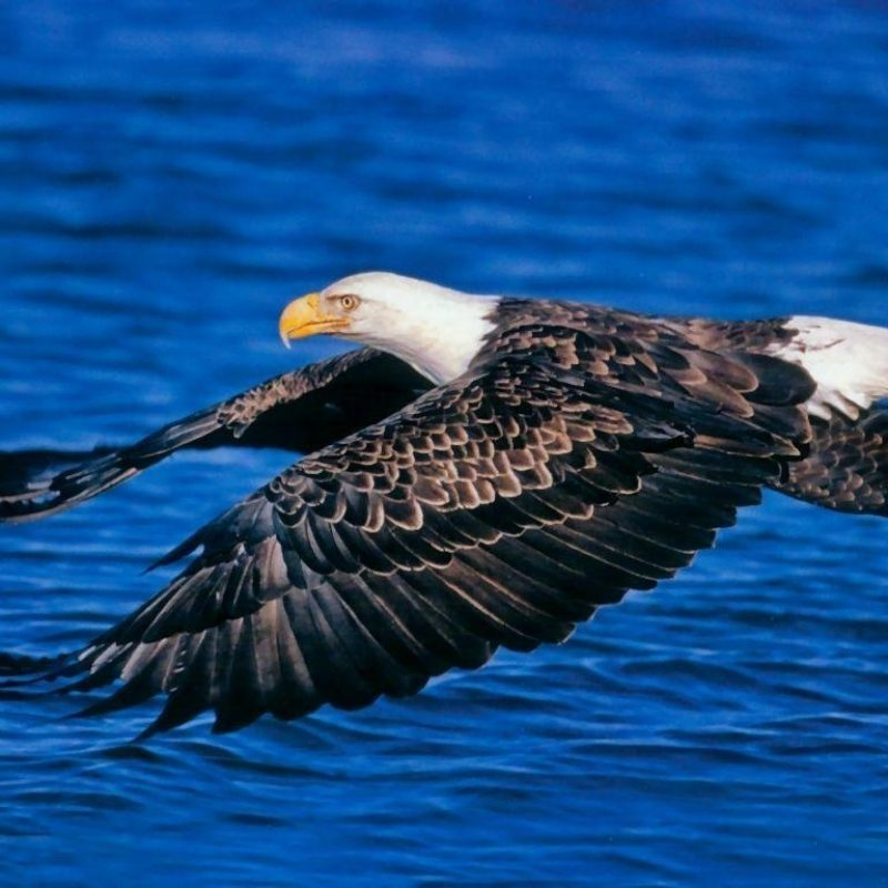 10 New Wildlife Wallpapers Free Download FULL HD 1080p For PC Background 2020 free download wildlife desktop backgrounds wallpaper cave 800x800