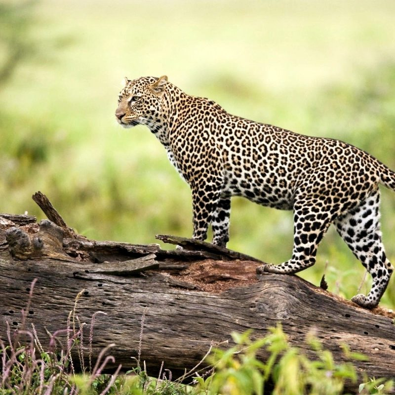 10 New Wildlife Wallpapers Free Download FULL HD 1080p For PC Background 2020 free download wildlife wallpapers free download group 85 800x800