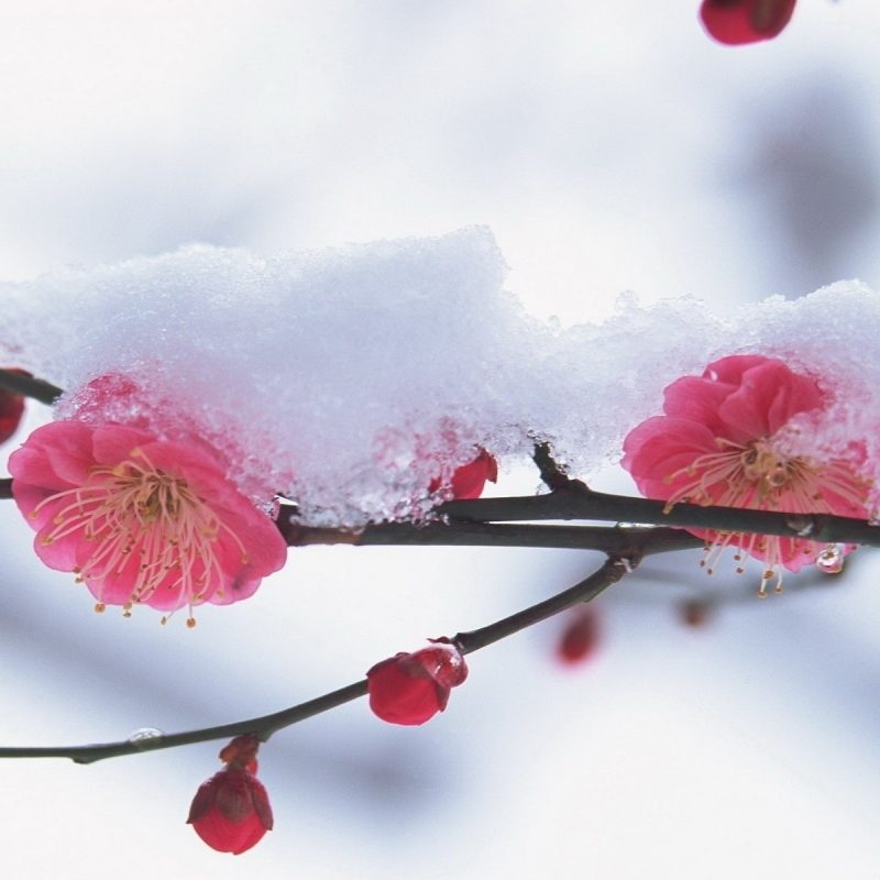 10 Latest Winter Flowers Wallpaper Backgrounds FULL HD 1920×1080 For PC Background 2018 free download winter flowers 25808 1920x1200 px hdwallsource 800x800