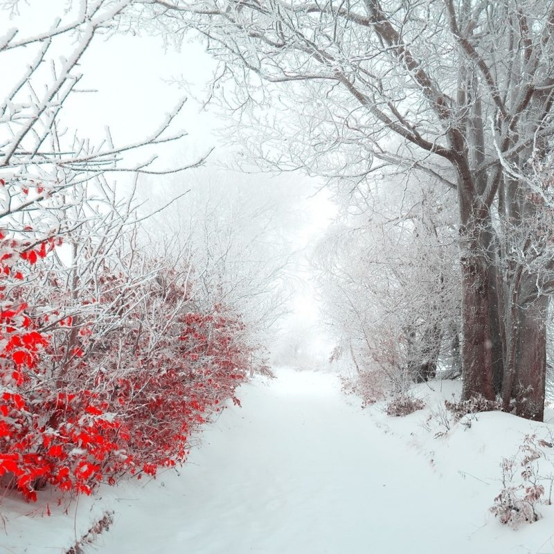 10 Latest Winter Flowers Wallpaper Backgrounds FULL HD 1920×1080 For PC Background 2018 free download winter flowers 25811 1920x1080 px hdwallsource 800x800