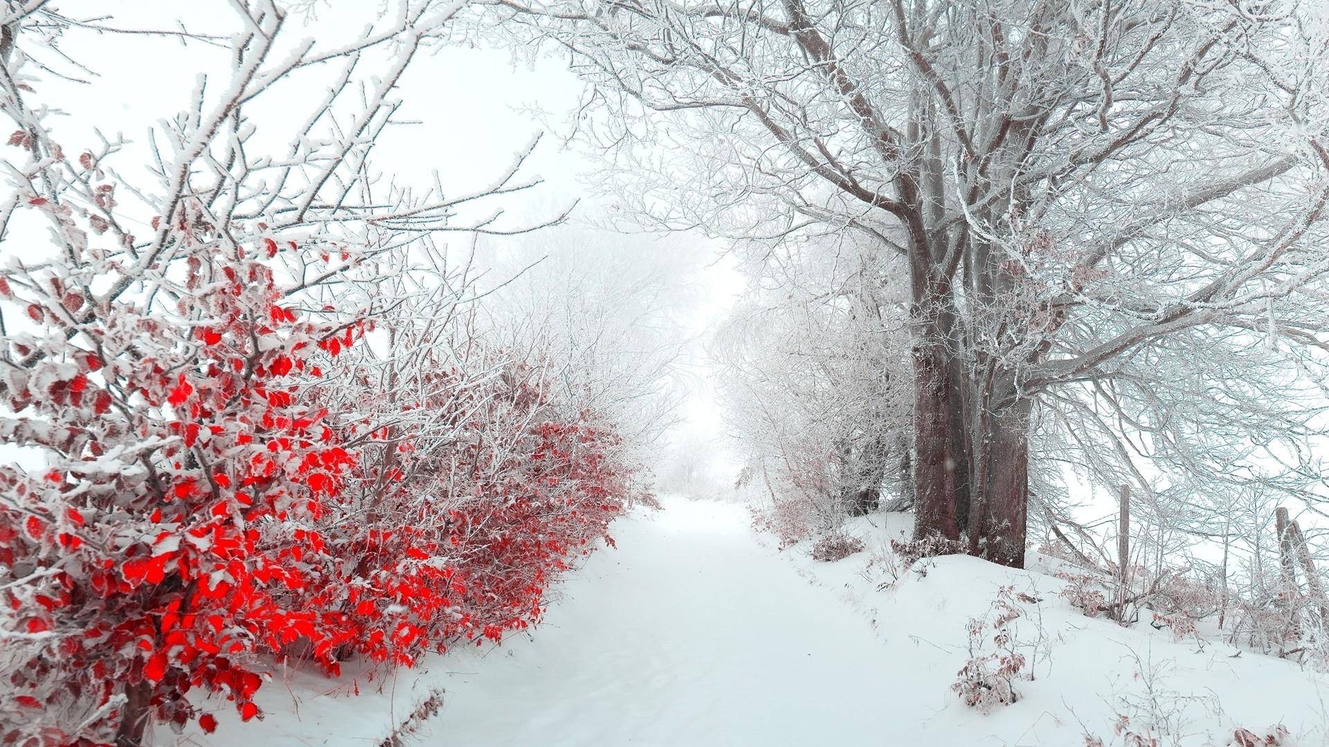 winter flowers 25811 1920x1080 px ~ hdwallsource