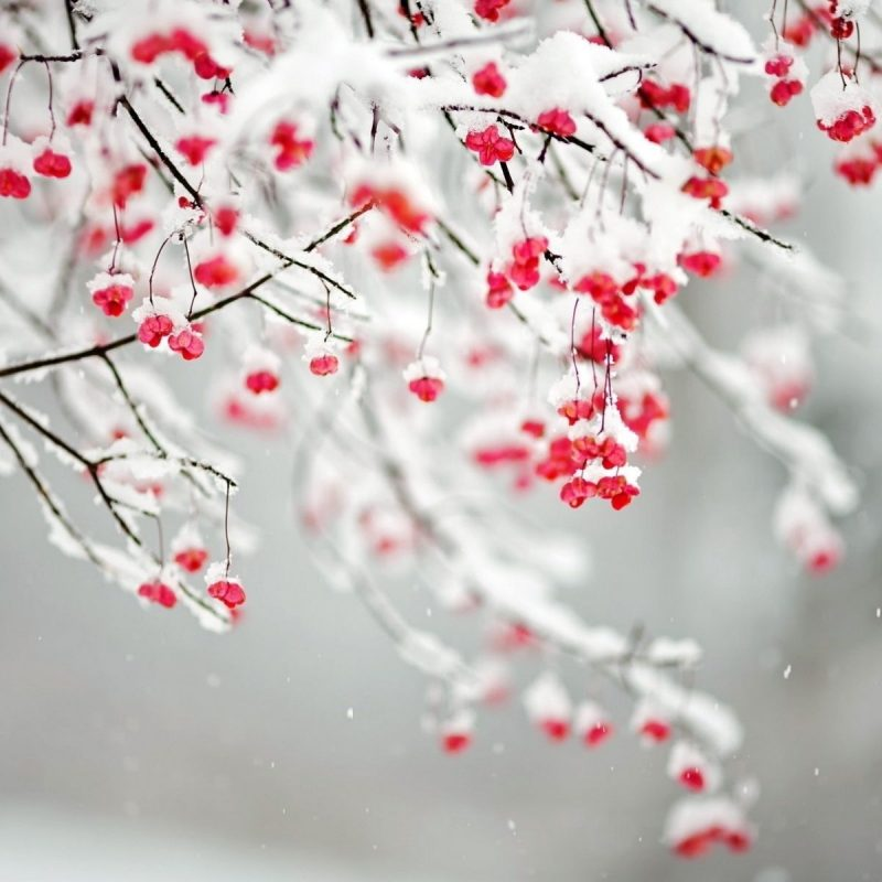 10 Latest Winter Flowers Wallpaper Backgrounds FULL HD 1920×1080 For PC Background 2018 free download winter flowers flowers pinterest winter flowers 800x800