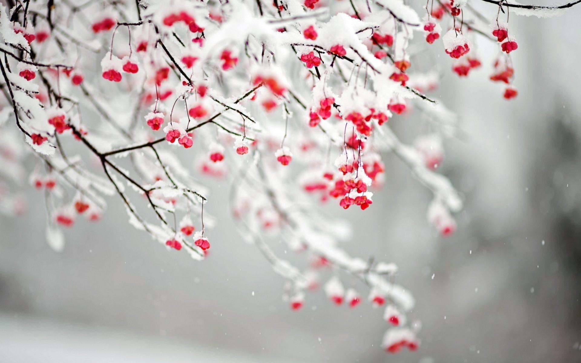 winter flowers | flowers.. | pinterest | winter flowers