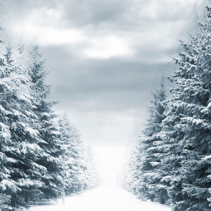 10 Latest Winter Forest Hd Wallpaper FULL HD 1920×1080 For PC Background 2020 free download winter forest wallpapers 44 winter forest hdq images wallpapers 800x800
