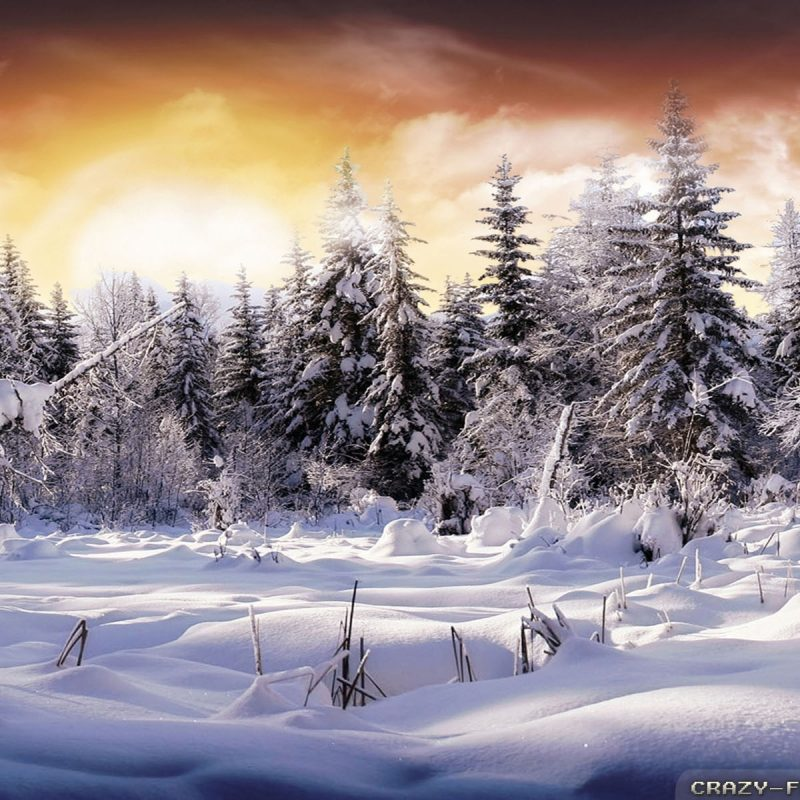 10 Best Beautiful Winter Landscapes Wallpapers FULL HD 1080p For PC Background 2020 free download winter landscape wallpapers 3 crazy frankenstein 800x800