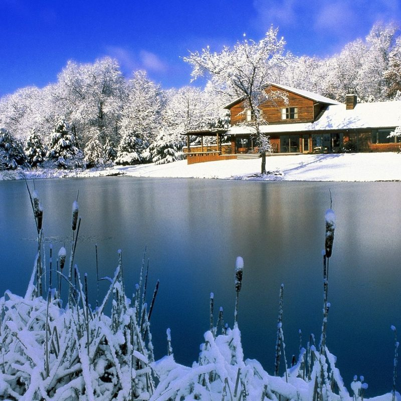 10 Most Popular Winter Nature Scenes Wallpaper FULL HD 1920×1080 For PC Background 2021 free download winter nature scenes wallpapers for free download about 1539 800x800
