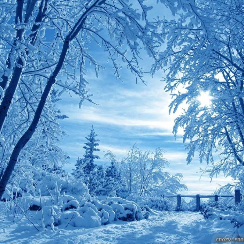 10 Most Popular Winter Nature Scenes Wallpaper FULL HD 1920×1080 For PC Background 2021 free download winter nature scenes wallpapers gallery 68 plus pic wpw508885 800x800