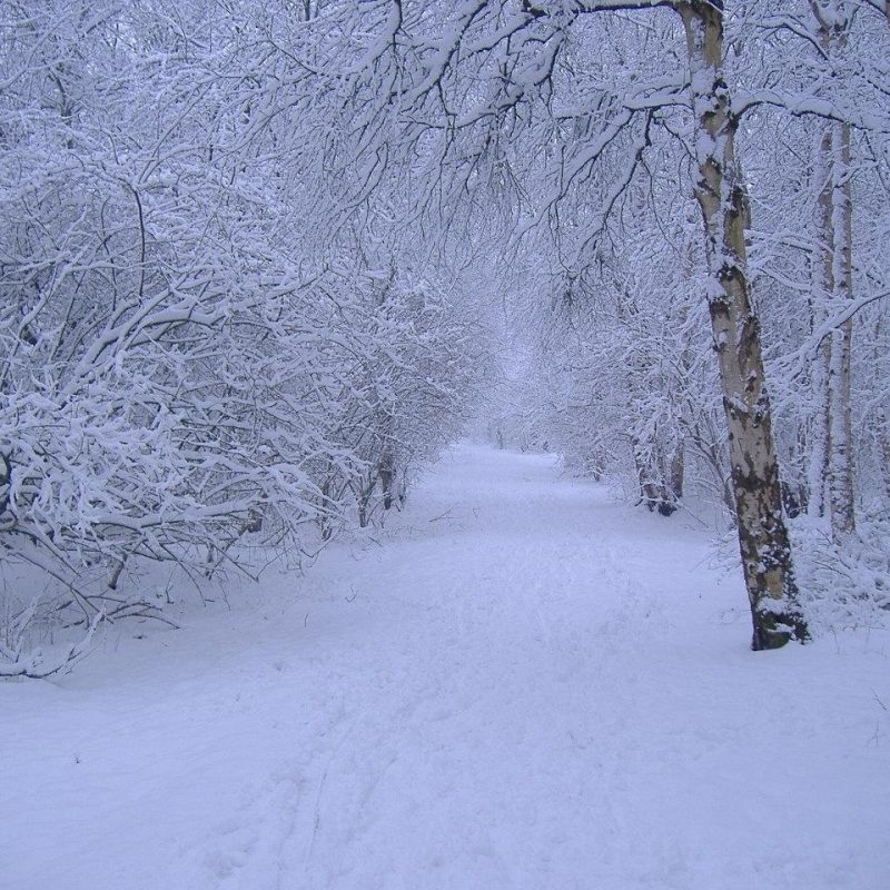 10 Best Free Winter Scene Wallpaper FULL HD 1920×1080 For PC Desktop 2018 free