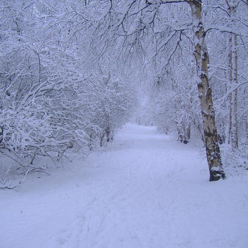 10 Best Free Winter Scene Wallpaper FULL HD 1920×1080 For PC Desktop 2018 free download winter scene wallpapers images and nature wallpaper winter scene 800x800