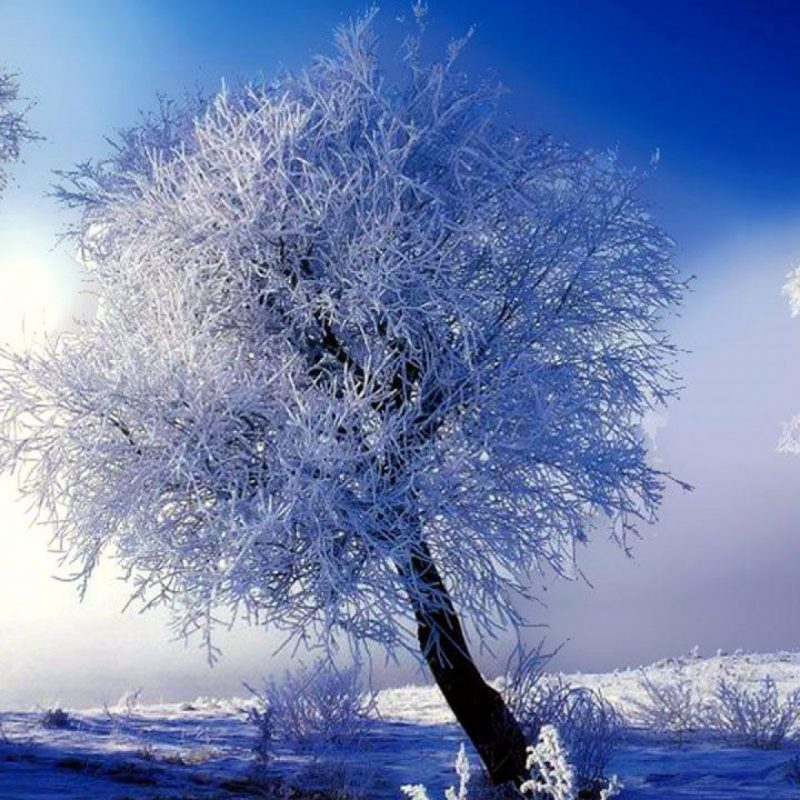 10 New Winter Scenes Desktop Background FULL HD 1920×1080 For PC Background 2018 free download winter scenes desktop backgrounds gallery 79 plus pic wpw509582 1 800x800